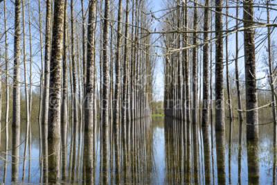 Arçais - chemin parallèle à La Broue d'Arçais