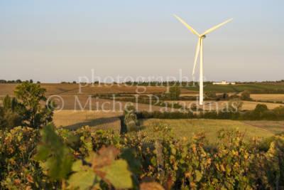 PRIEURE LA CHAUME, vigne, Point de vue depuis les hauteur du Prieré de la Chaume