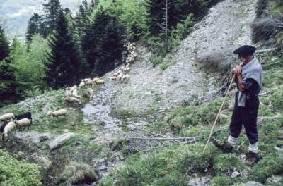 Transhumance mouton, dernière montée du XXe siècle, avec François Cascarre.